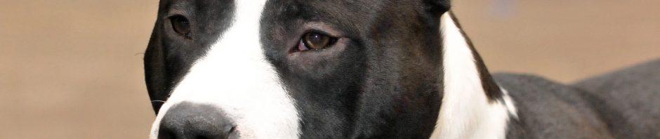 Assurance chien categorie 2