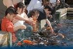 aquarium24