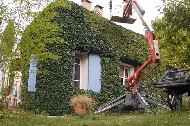 maison lierre coupe